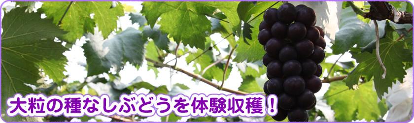 フルーツ 狩り 埼玉